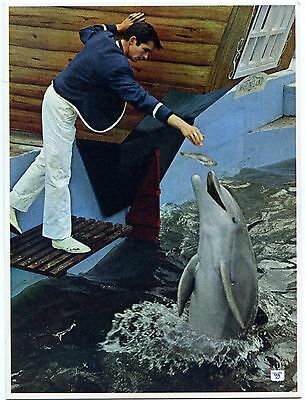 Bottle Nosed Dolphin - Marineland - Morecambe - Postcard View 2