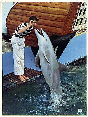 Bottle Nosed Dolphin - Marineland - Morecambe - Postcard View 3