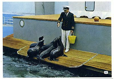 Californian Sea Lions - Marineland - Morecambe - Postcard View