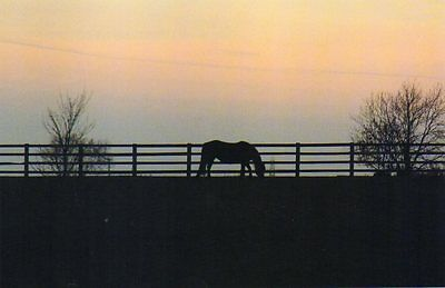 BRANSBY postcard of NAMED RESCUED HORSE - CLARA