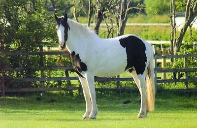 BRANSBY postcard of NAMED RESCUED HORSE - LITTLE PRINCESS
