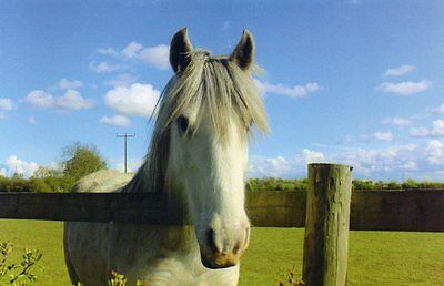 BRANSBY postcard of NAMED RESCUED HORSE - OWEN