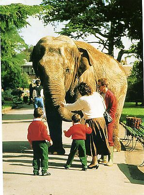 Bristol Zoo - Asian Elephant - Wendy - Postcard View
