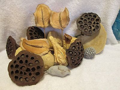 Mixed Lot of Dried Lotus Pods & Gourds Fall Craft Decorations