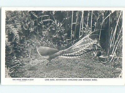 old rppc LYRE BIRD country of Australia HM2041