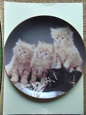 Danbury Mint Purrfect Portraits Kitten Plate