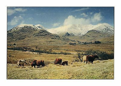 Ben Cruachan Snow-Capped Peak Looking West From Dalmally Argyll Scotland A Dixon