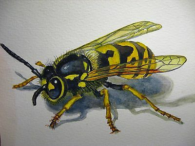 Original Watercolor Painting Insect Realistic Wasp Art 5x7 inches