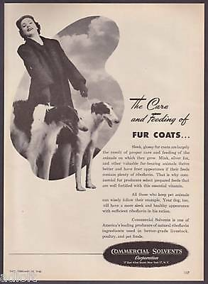 1946 Two Borzoi Russian Wolfhounds Photo C. Solvents Ad