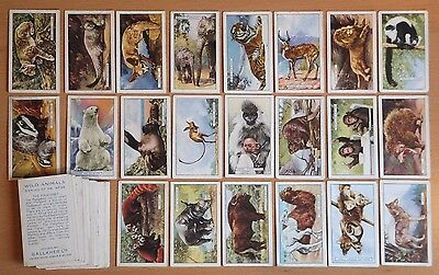 GALLAHER, WILD ANIMALS 1937. 47 cigarette cards from the set of 48. Good overall