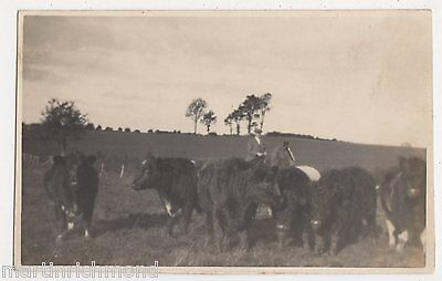 Worcester Show 1930, 1st Prize Bullocks Real Photo Postcard, B506