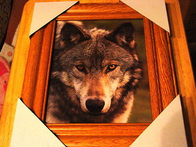 Wolf 11X13 Mdf Framed Picture ( Wood Color Frame )