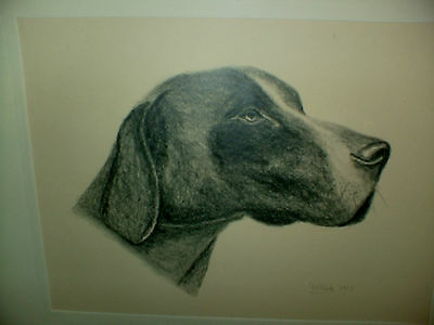 Artist Signed - Framed - Black + White -  Period Drawing  Of Fox  Hound Dog -