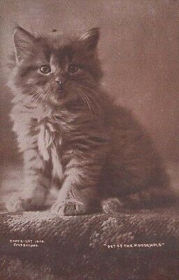 Cats Pet Of The Household The Cute Kitty Series Antique Postcard