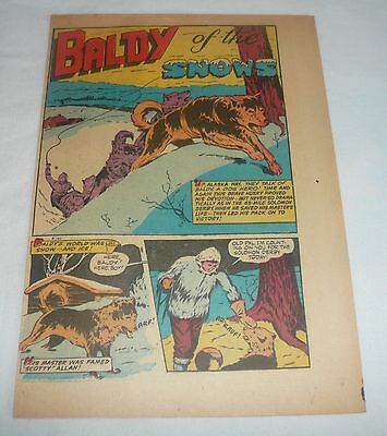 1949 two page cartoon story ~ BALDY OF NOME ~ Baldy Of The Snows