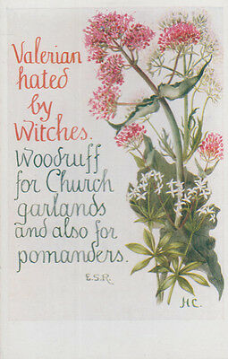 Valerian Hated By Witches Wicca Old Romany Natural Remedy Song Songcard Postcard