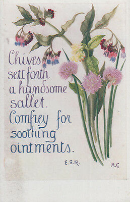 Chives Handsome Sallet Comfrey Ointment Natural Remedy Song Songcard Postcard
