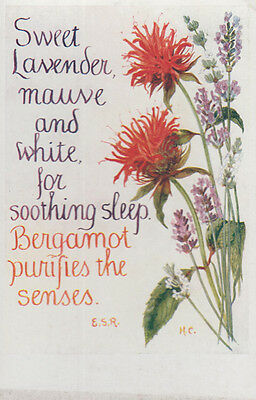 Sweet Lavender Plant Sleeping Aid Romany Natural Remedy Song Songcard Postcard