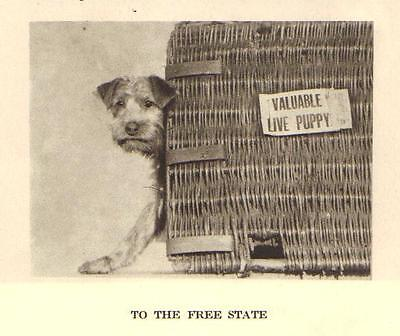 "Airedale Terrier Pup ""P"" - 1931 Vintage Dog Print"
