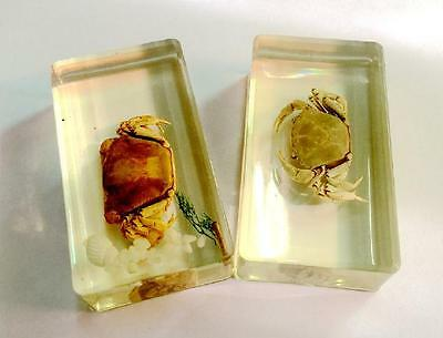 WHOLESALE 2PC REAL INSECTS HUGE CRAB CLEAR paper-weight  cs0-1