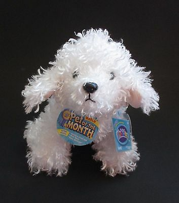 WB5 Bichon Frise dog WEBKINZ PLUSH new code stuffed animal ganz