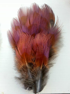 Fly tying / Native crafts - Ringneck Pheasant iridescent-tip back flank feathers