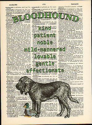 Bloodhound Hound Dog Traits Altered Art Print Upcycled Vintage Dictionary Page