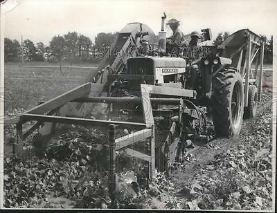 1967 Press Photo A pickle picking machine in action on a farm near Wautoma