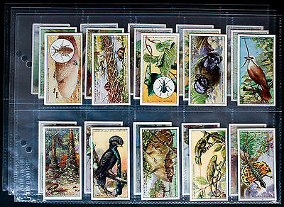 Set of 25 - LAMERT & BUTLER - WONDERS OF NATURE - 1924 - Photos of all B & F