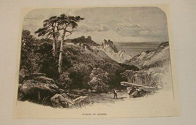 1893 magazine engraving ~ FOREST OF AITONE, Corsica, France