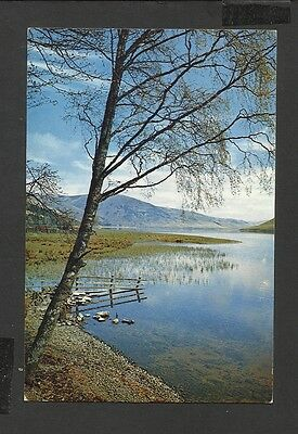 A Dixon Colour Postcard View St. Mary's Loch Selkirkshire Scotland Unposted