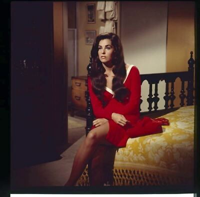 Edy Williams On Bed Red Dress Original 2 1/4 Color Slide Transparency & Photo