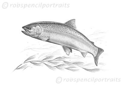 RAINBOW TROUT Fly Game Fishing Art Print From Drawing by Robin Woolnough