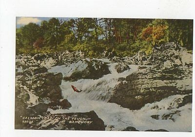 Salmon Leap On The Feugh Banchory Old Postcard 0716