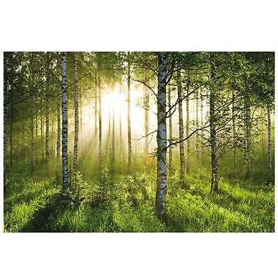 Forest Wallpaper Wall Mural Use In Any Room Feature Wall Modern Design Free P+P