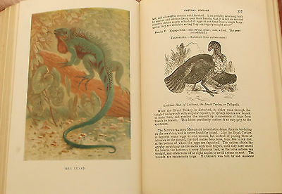 1912 Wood's Natural History Elephants Dodo Lizards Antiquarian Natural History