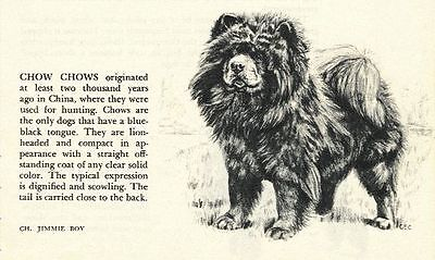 Chow Chow - 1945 Vintage Dog Print - G. Cook