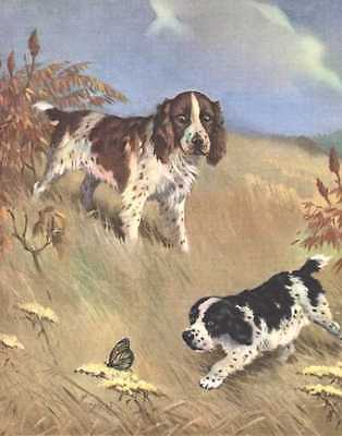 English Springer Spaniel - Dog Print - 1970 W. Dennis