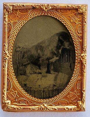 Antique Tintype Photograph ~ Young Dog