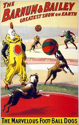 1900 Barnum Bailey Circus Poster Pit Bull Terrier Football Dogs Clowns Print 670
