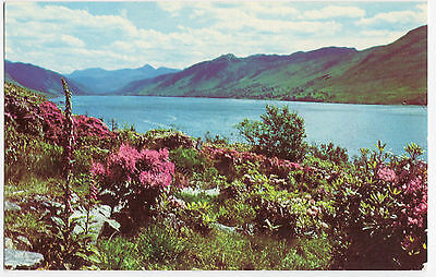 Loch Broom Ullapool Ross & Cromarty Colourmaster New 1970 Rhododendrons