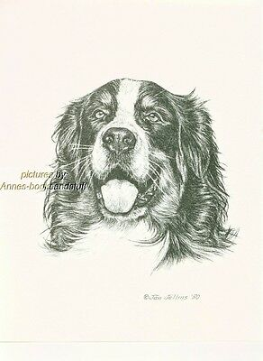 #265 BERNESE MOUNTAIN DOG  *  dog art print * Pen and ink drawing * Jan Jellins
