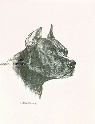 #293 PIT BULL TERRIER *  dog art print * Pen and ink drawing * Jan Jellins