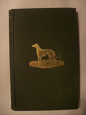 GREYHOUND STUD BOOK  Volume 8 - 1889 -  Coursing, Waterloo Cup -  WYE Racecourse