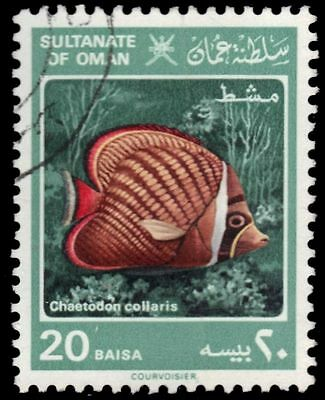"""OMAN 280 (SG285) - Red-tailed Butterflyfish """"Chaetodon collaris"""" (pa80901)"""