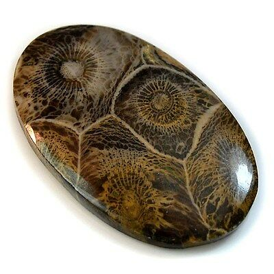 43.5Ct Natural Moroccan Fossil Coral (42mm X 27mm) Cabochon