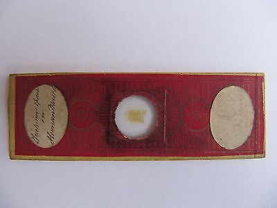Antique Microscope Slide by ' C.M. TOPPING ' Human Muscle etc '