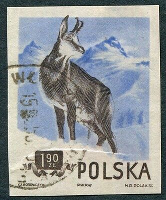 POLAND 1954 1z90 black-brown and cobalt SG902 used NG IMPERF Chamois #W7