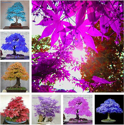 Colorful Flower Fruit Plants Grass Seeds Flower Seeds Garden Decor Perennial