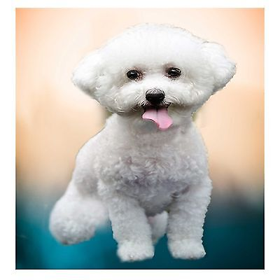 "Animal Life Collectable Art by Graphic-Arts-USA.com ""Bichon Frise"""